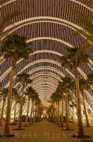 Golden lighting lights up a perfect row of Palm trees at the L'Umbracle Garden in Valencia, Spain.