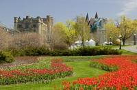 A tulip garden seen during the Ottawa Tulip Festival, an annual spring event in Canada.