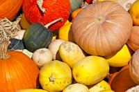 A variety of gourds, squashes and pumpkins, on display during fall in the Okanagan Similkameen Region of British Columbia.