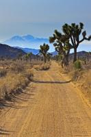 A flat gravel road, flanked by Joshua Trees in Joshua Tree National Park, winds through the terrain of the Mojave Desert towards a mountain range in California, USA.