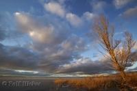 A bare tree and brown grasses make for a stunning sunset photo of contrasts over Great Salt Lake in Utah.