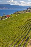 Greata Ranch Estate Winery Vineyard Okanagan Lake
