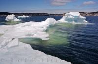 Every year pack ice fills the St Anthony harbour on the Great Northern Peninsula in Newfoundland, Canada and can cause some problems for the local residents.