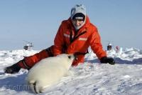 Heather Mills McCartney spends some time with a harp seal pup on the ice floes on the Gulf of St Lawrence, to help save these seals from certain death.