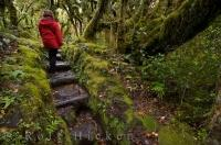 A fairly easy trail for any hiker is the Kapuni Loop Track in Egmont National Park on the North Island of NZ.