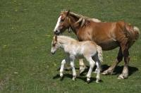 Horse And Foal Picture