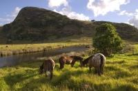 New Zealand Landscape Horse Pictures