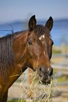 Horse Animal Portrait Picture
