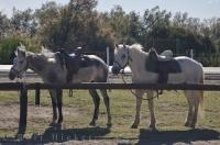 Camargue Horse Riding Tour Provence France