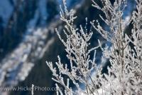 Ice Frosted Trees Wilderness Landscape Austria