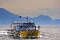 The bright blue and yellow colours of the Wheketere is seen daily on the waters off Kaikoura, NZ as long as there is enough passengers to board this whale watching boat.