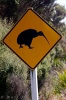 Kiwi Road Sign West Coast