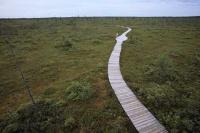 Situated in New Brunswick, Kouchibouguac National Park features a mosaic of salt marshes, tidal rivers, bogs, and is a great place to visit during a vacation.