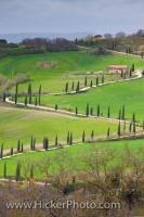 La Foce Zigzagging Road Cypress Trees Tuscan Landscape Tuscany Italy