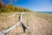 Dunes adorn the beach on the shores of Lake Erie in Point Pelee National Park in Leamington, Ontario in Canada.