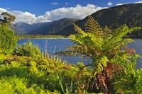 A tree fern beautifies the banks of Lake Moeraki located along the Glacier Highway on the South Island of New Zealand.
