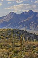 Mountain Landscape Saguaro National Park