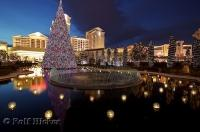 The beautiful reflections of the christmas tree on the water featured outside Caesars Palace in Las Vegas, Nevada.