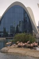 Chilean Flamingos love to wade in the waters outside the L Oceanografic at the City of Arts and Science in Valencia, Spain.