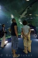 A must see when visiting L'Oceanografic in the city of Valencia in Spain is the 30 metre long tunnel - underwater!