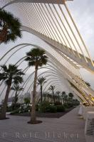 The tall palms reach up to the ceiling of the L'Umbracle and sweep the top beams of this garden in the city of Valencia, Spain.
