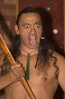 A Maori man shows the famous Haka dance the probably most know maori symbol for this unique New Zealand culture