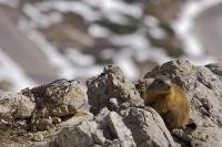 The Falzarego Pass is has a wide variety of flora and fauna including marmots and chamois