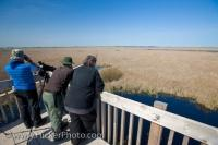Tourists are bird watching as they stand at the top of the watch tower at the marshland boardwalk in Point Pelee National Park in Leamington, Ontario.