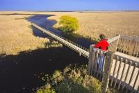 A tourist looks out over the boardwalk winding its way through the marshland in Point Pelee National Park in Ontario where nature is at its best.