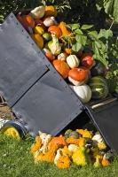 Mine Cart Pumpkin Squash Crops Okanagan