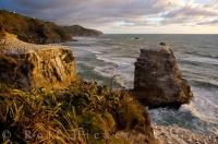 Muriwai Beach Gannet Colony New Zealand