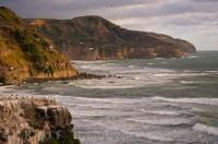 Muriwai Coastline Gannet Colony New Zealand