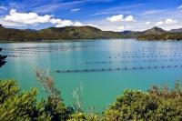Mussel Farm Kenepuru Sound Waitaria Bay Marlborough Sounds New Zealand