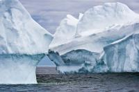 Two large floating icebergs showing off their natural shapes and lines off the coast of Newfoundland in Iceberg Alley.