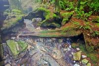 In this scenic image of a natural rainforest, the foliage of moss and plants growing beside the river can be clearly seen due to all the vibrant colours. This stream supplies the natural hot mineral water to Hot Springs Cove on Vancouver Island.