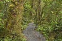 Fiordland National Park of New Zealand supports of network of Native Trees which are endemic.