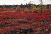 New Brunswick Fall Kouchibouguac