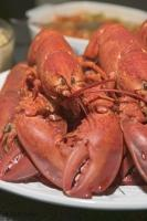 When visiting the province of Newfoundland, Canada be sure to try a fresh cooked lobster straight from the Atlantic.