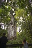 Situated in Northland on the North Island, the Waipoua Forest is home the largest stand of kauri trees in New Zealand.