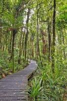 A path leads through the Trounson Kauri Forest Park in Northland, New Zealand.