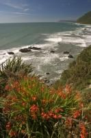 A sample of some coastal ocean plants found on the West Coast of the South Island of New Zealand