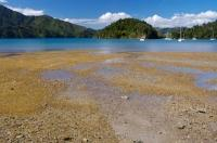 Ngakuta Bay Marlborough Sounds NZ