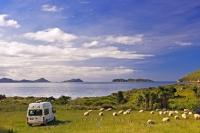 A rented camper, parked in the rustic Titiriangi Bay Campground in the beautiful Marlborough Sounds, is surrounded by sheep.