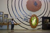 This display is painted right on the wall at the Matakohe Kauri Museum and by way of growth rings, shows the sizes of kauri trees.