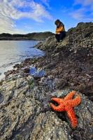 Among the many activities available in Pacific Rim National Park on the West Coast of Vancouver Island in BC, combing the rocks at low tide for sea life is one of the most popular. It is common to see colourful ochre sea stars, and sea anemones.