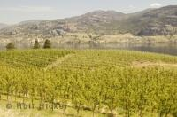 The Okanagan Valley is a prime wine growing region in Southern British Columbia, Canada and a warm place for a family vacation.