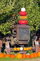 Brightly coloured pumpkins are stacked on top of and surround this old tractor. When squashes and pumpkins are ripe for picking it's a clear indication that fall has arrived.