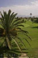 Golfing at the Oliva Nova Golf Course in Oliva, Valencia in Spain, Europe is a challenge even for the best golfers.