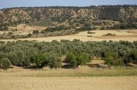 Residents grow fields full of olive trees in Zaragoza, Aragon in Spain, Europe.