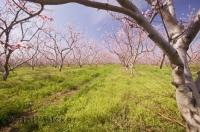 orchards of ontario